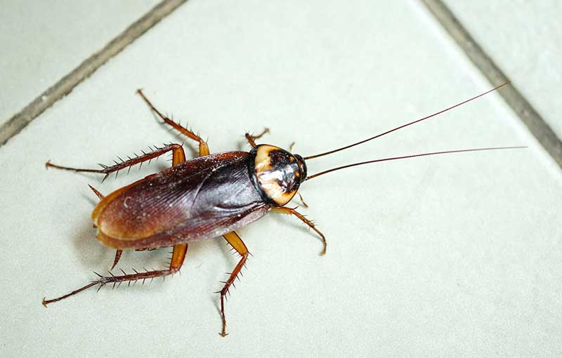 _0007_cockroach
