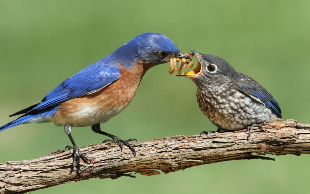 How to Attract Insect-Eating Birds