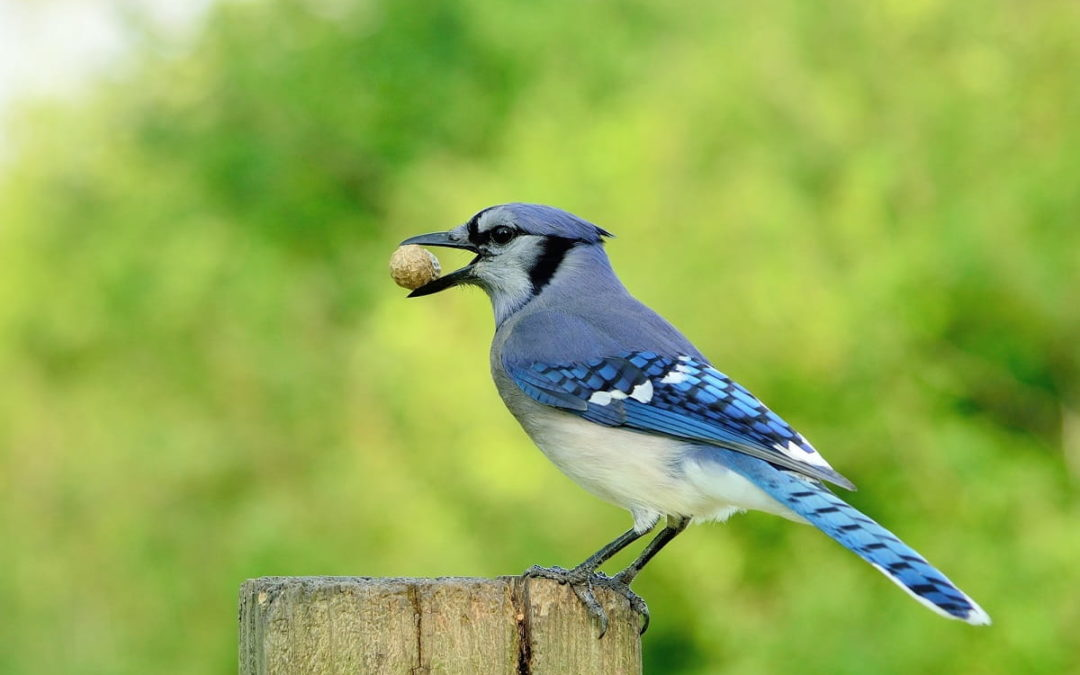 How Birds Can Damage Your Home