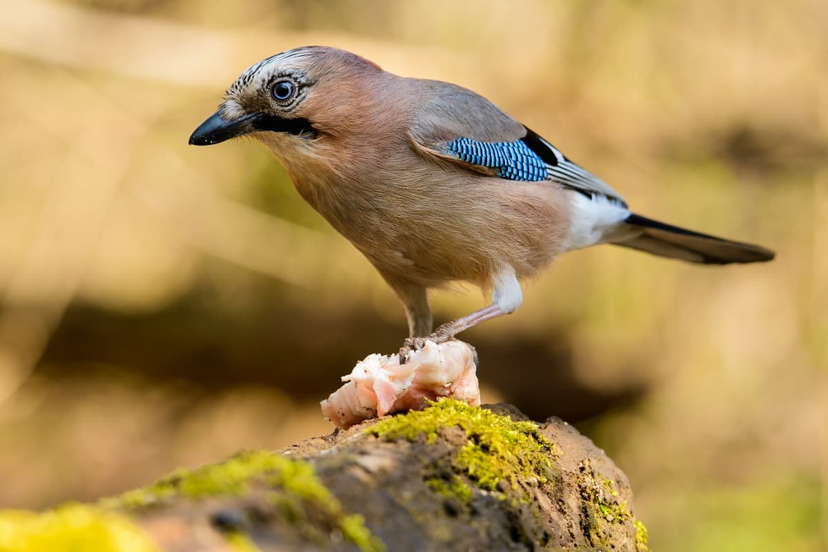 How Birds Can Damage Your Home 2