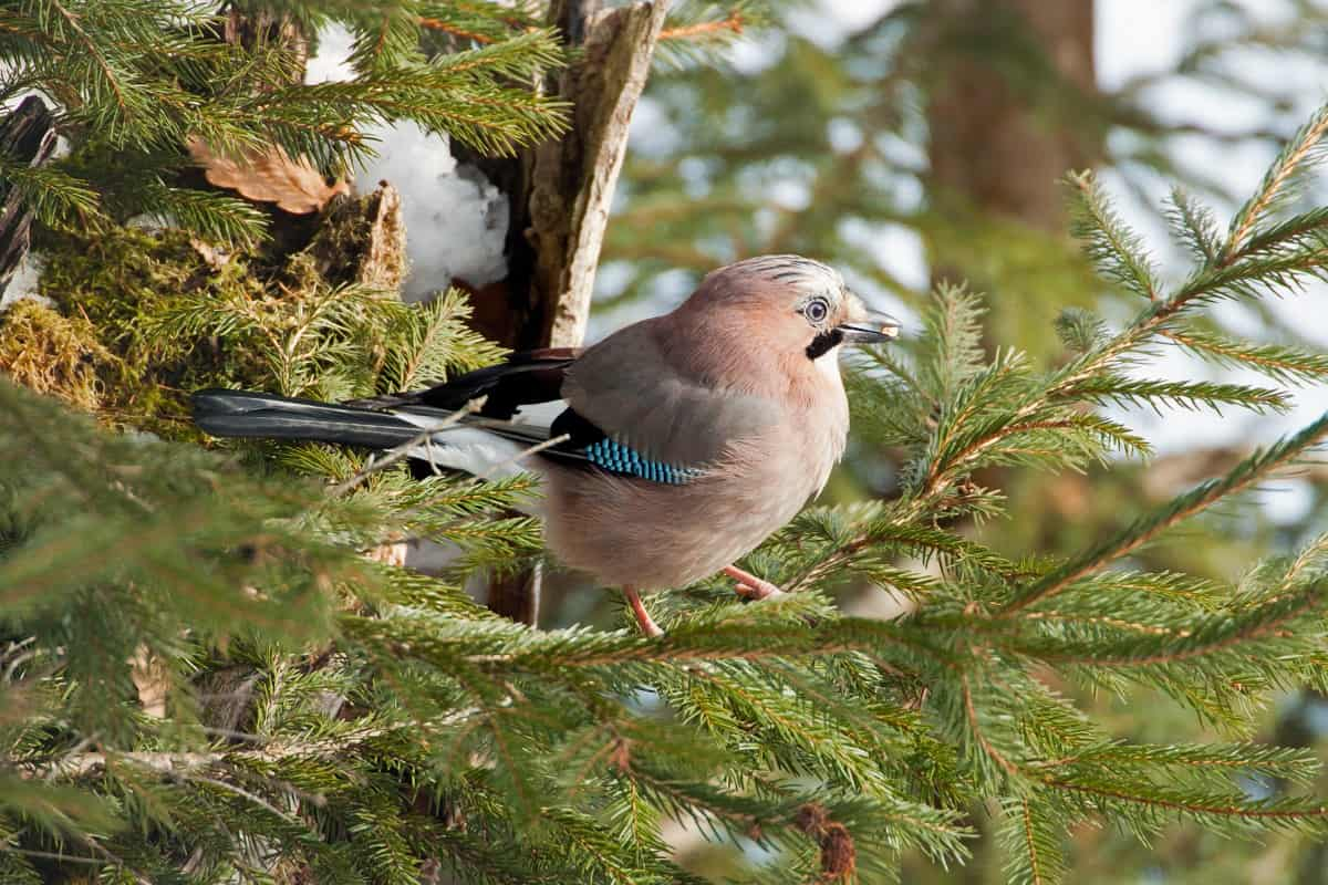 How Birds Can Damage Your Home 3
