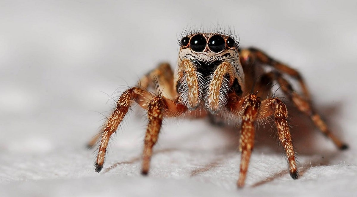 Arachnophobia (Fear of Spiders)