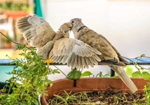 Disadvantages of Attracting Birds in Your Backyard
