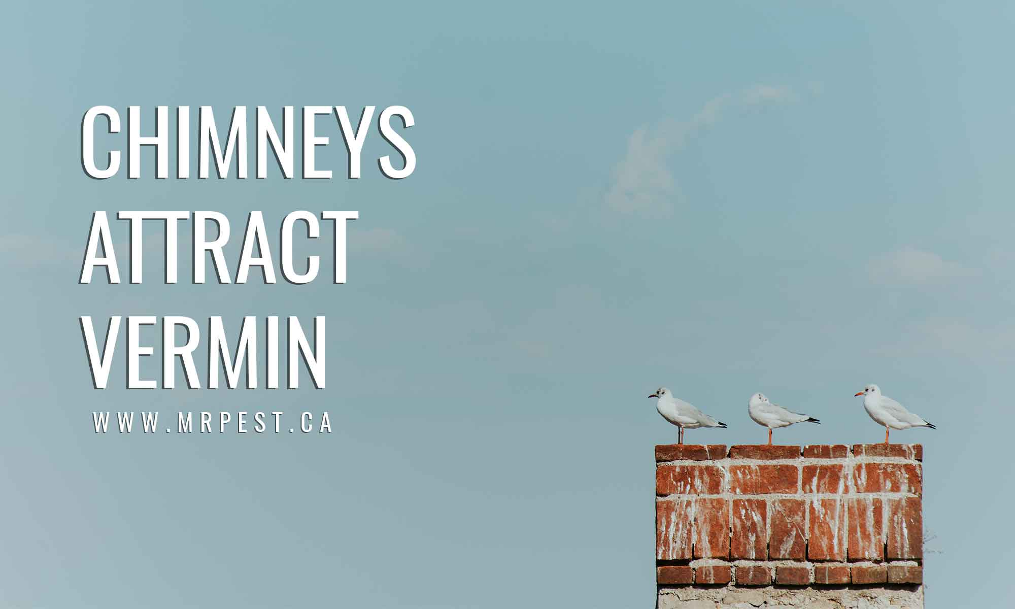 chimneys attract vermin