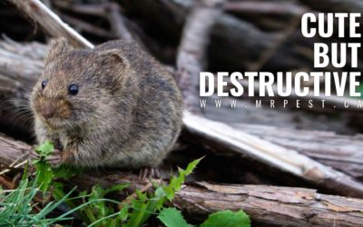 How Pests Lower Property Values:  Prevent Their Damage with These Tips