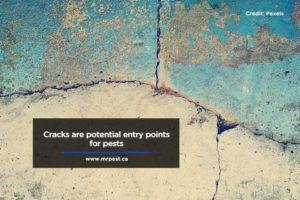 Cracks are potential entry points for pests