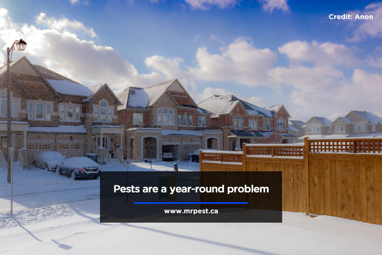 Pest-proof Your Home This Winter