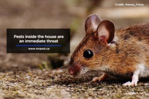 Pests inside the house are an immediate threat