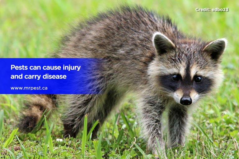 Pests can cause injury and carry disease