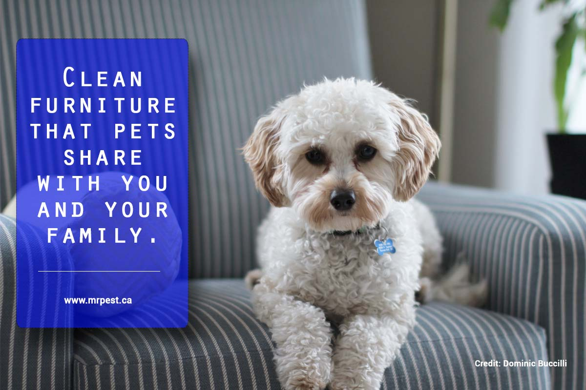 Clean furniture that pets share with you and your family.