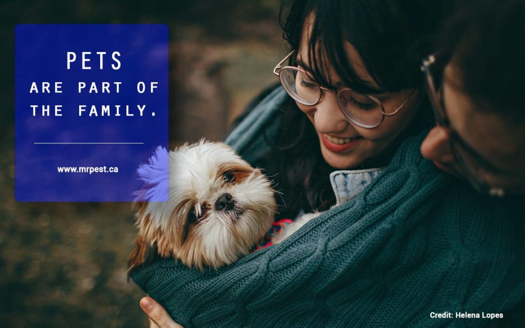 Pets are part of the family.