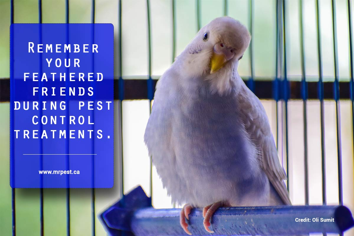 Remember your feathered friends during pest control treatments.