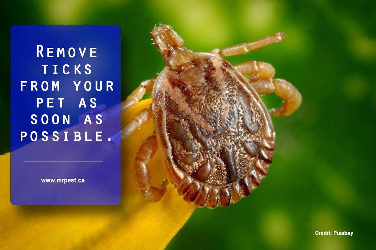 Remove ticks from your pet as soon as possible.