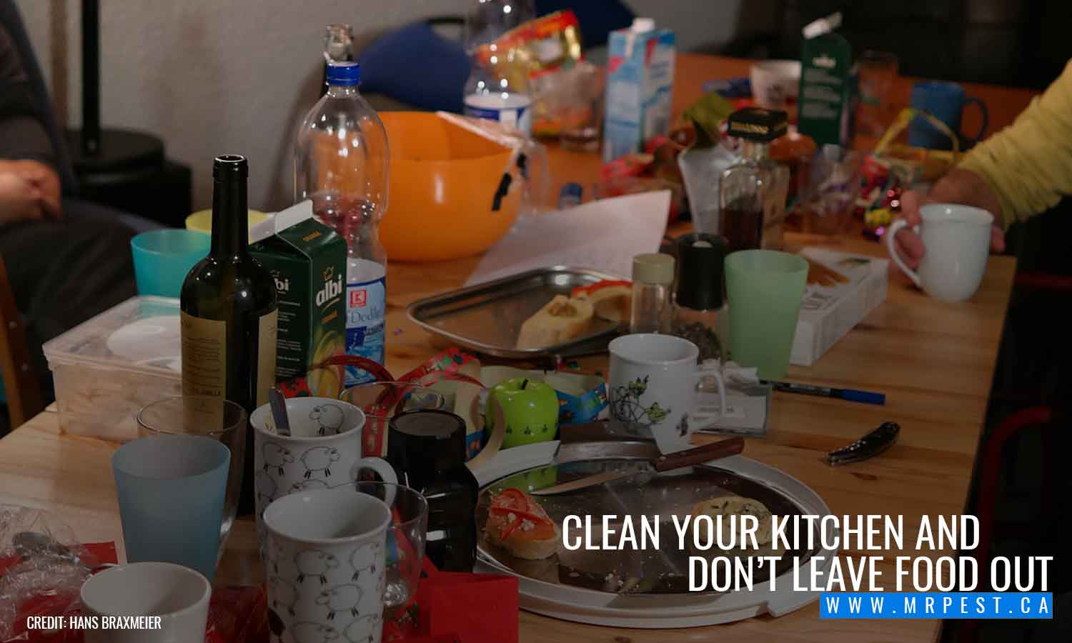 Clean your kitchen and don't leave food out