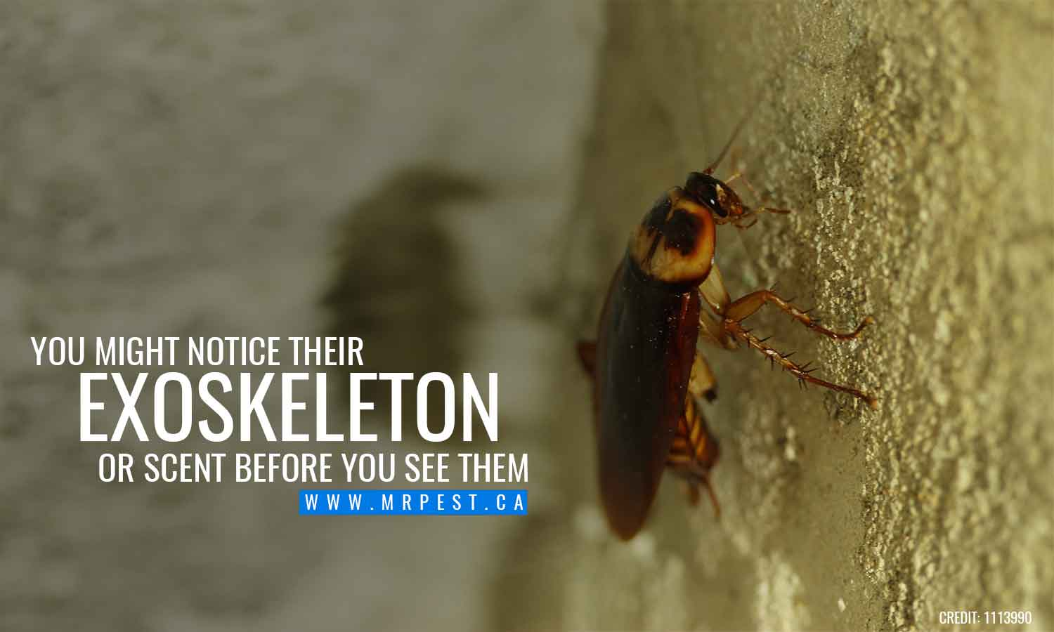 You might notice their exoskeleton or scent before you see them