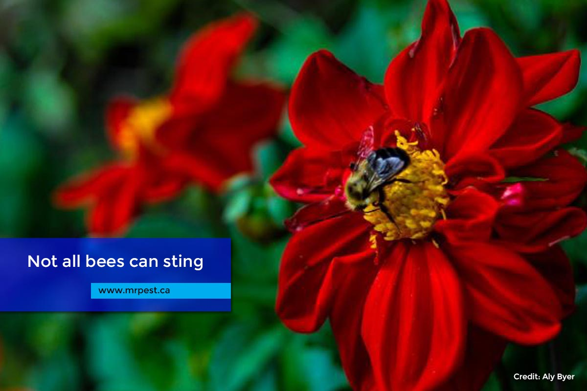 Not all bees can sting