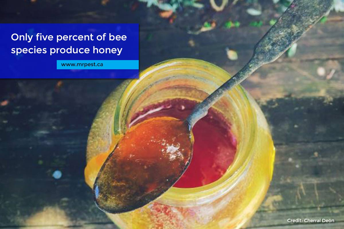 Only five percent of bee species produce honey
