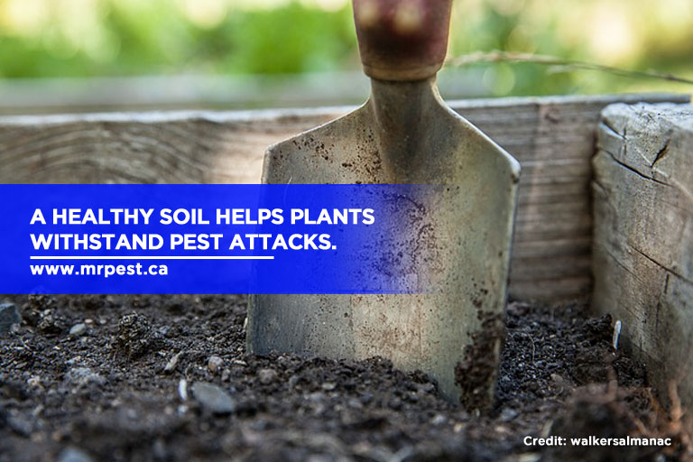 A healthy soil helps plants withstand pest attacks.