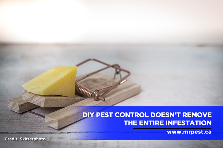 DIY pest control doesn't remove the entire infestation