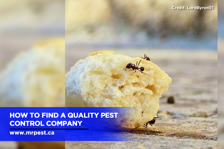 How to find a quality pest control company