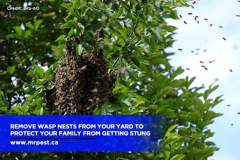 Remove wasp nests from your yard to protect your family from getting stung