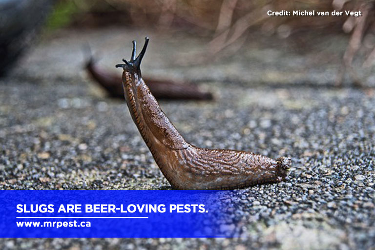 Slugs are beer-loving pests.