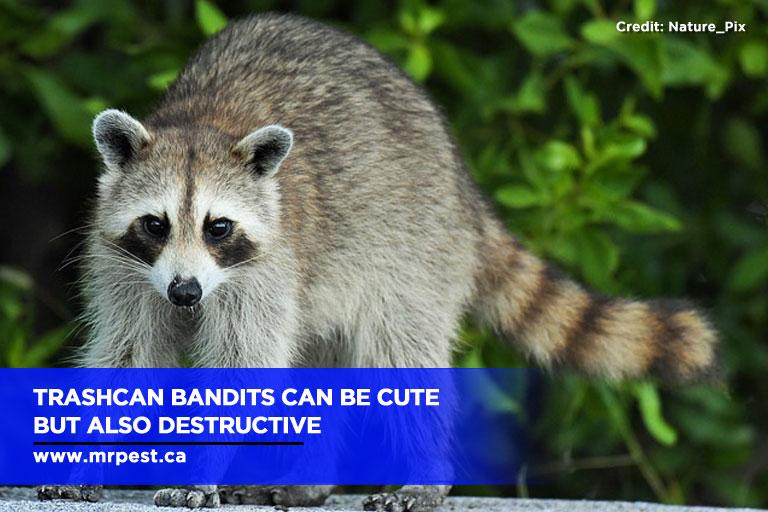 Trashcan bandits can be cute but also destructive