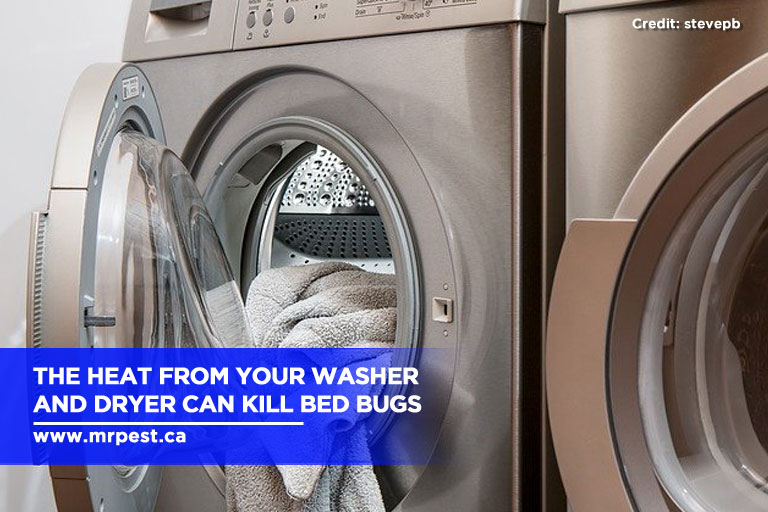 The heat from your washer and dryer can kill bed bugs