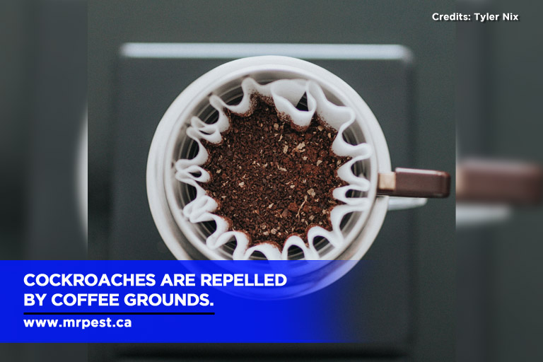 Cockroaches are repelled by coffee grounds.