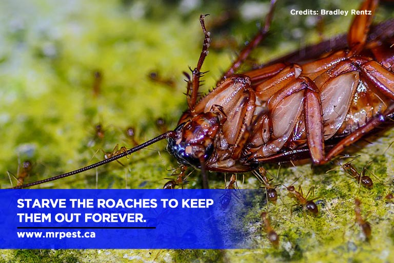 Starve the roaches to keep them out forever.