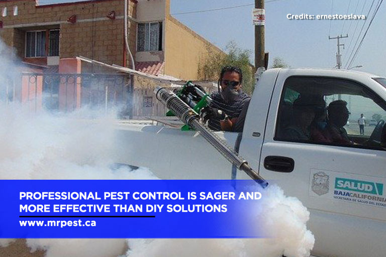Professional pest control is sager and more effective than DIY solutions