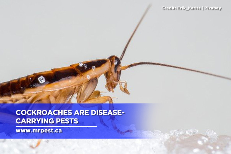 Cockroaches are disease-carrying pests