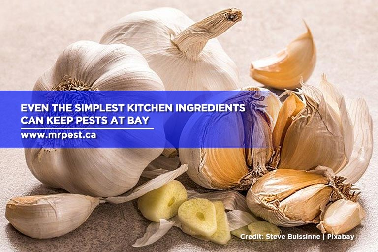 Even the simplest kitchen ingredients can keep pests at bay