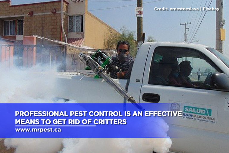 Professional pest control is an effective means to get rid of critters