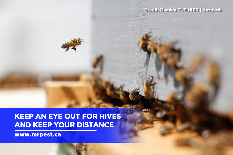 Keep an eye out for hives and keep your distance