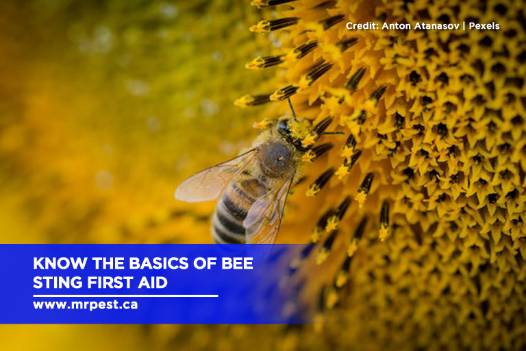 Know the basics of bee sting first aid