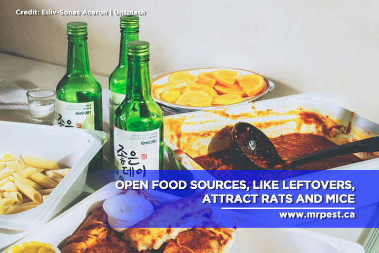 Open food sources, like leftovers, attract rats and mice