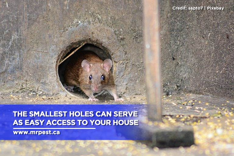 The smallest holes can serve as easy access to your house