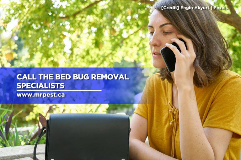 Call the bed bug removal specialists