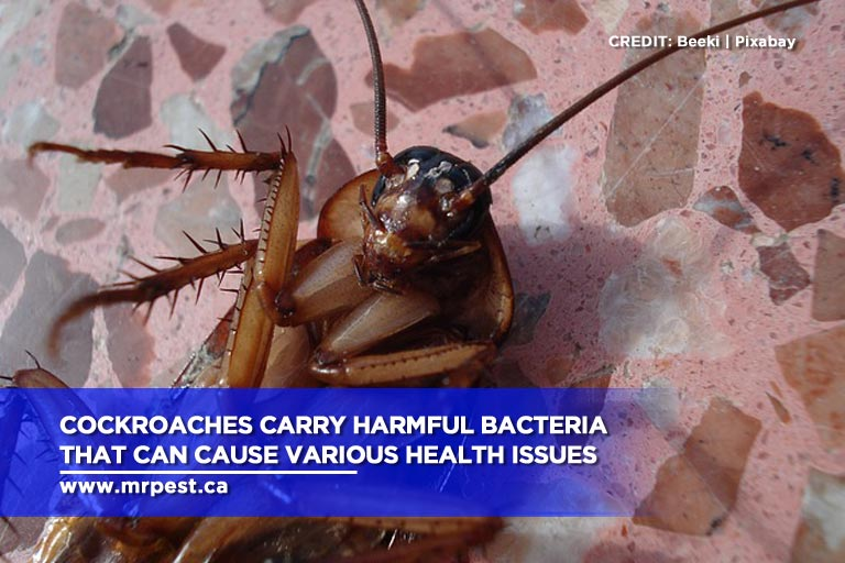 Cockroaches carry harmful bacteria that can cause various health issues
