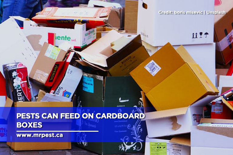 Pests can feed on cardboard boxes