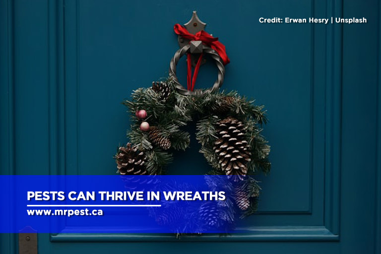 Pests can thrive in wreaths
