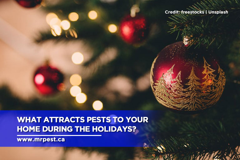 What Attracts Pests to Your Home During the Holidays?