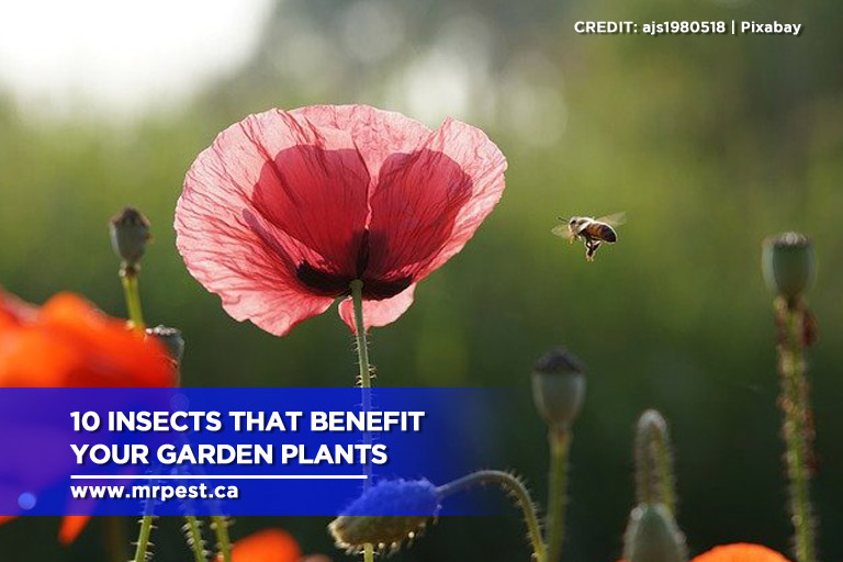 10 Insects That Benefit Your Garden Plants