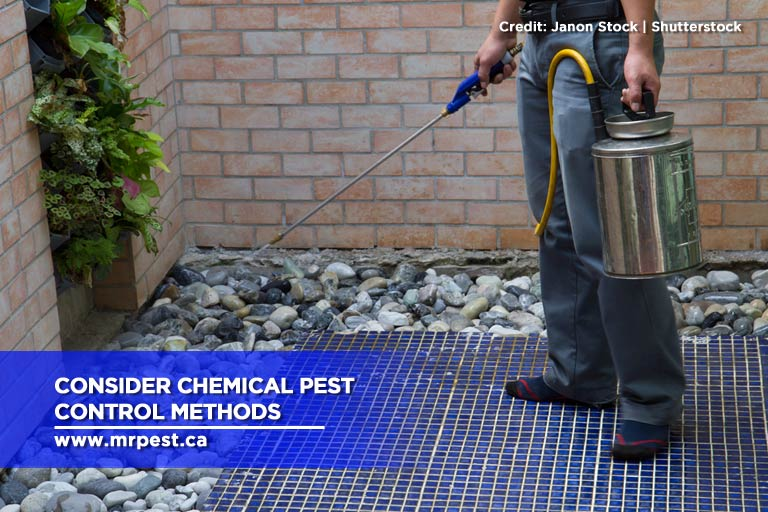 Consider chemical pest control methods