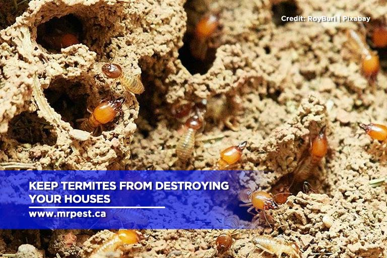 Keep termites from destroying your houses