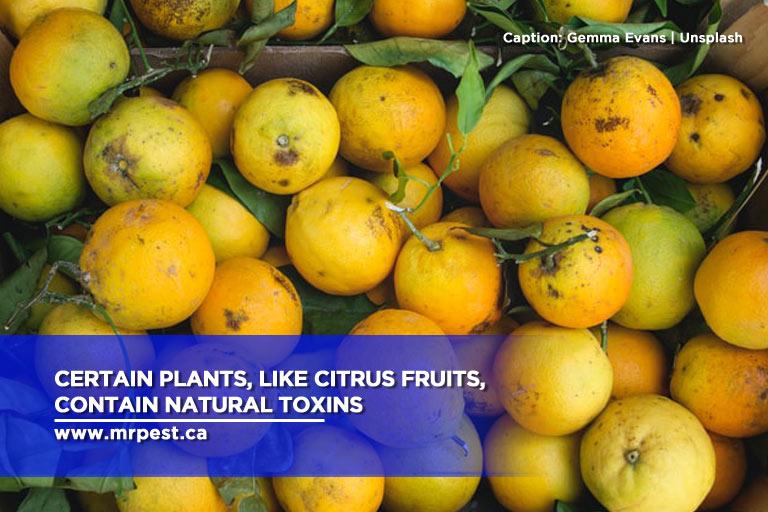 Certain plants, like citrus fruits, contain natural toxins