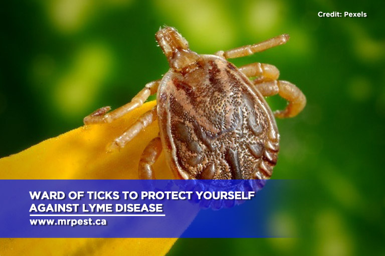 Ward of ticks to protect yourself against Lyme disease