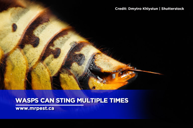 Wasps can sting multiple times