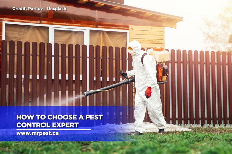 How to Choose a Pest Control Expert